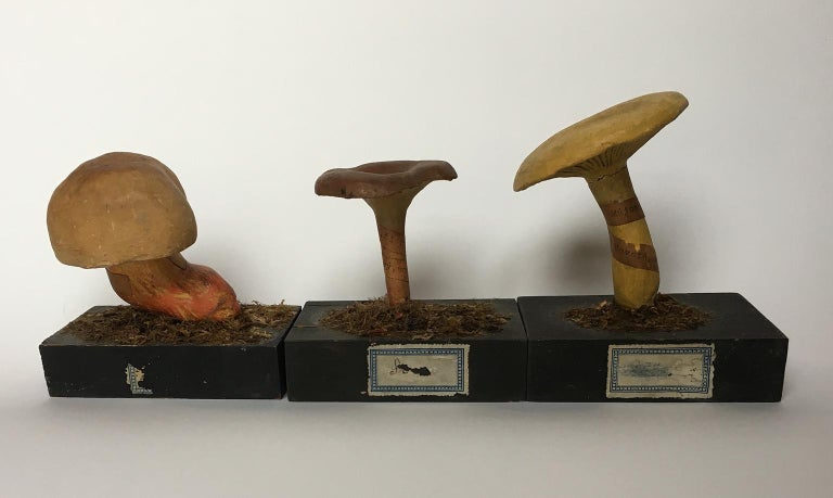 20th Century Wood and Painted Plaster Czech Mushroom Botanical Models circa 1920 For Sale 6