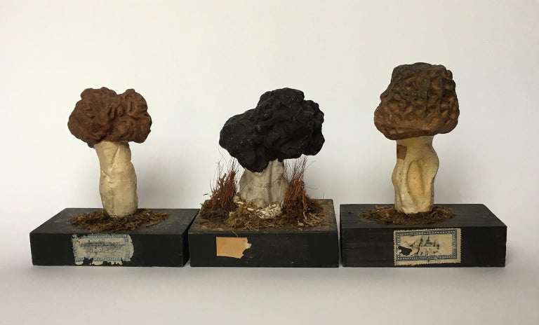 20th Century Wood and Painted Plaster Czech Mushroom Botanical Models circa 1920 For Sale 7
