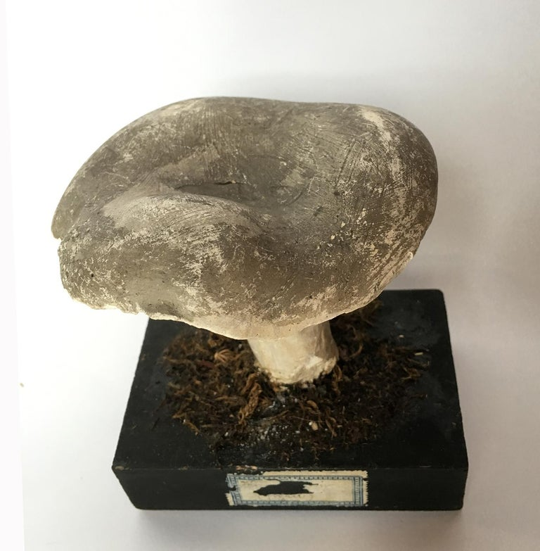 20th Century Wood and Painted Plaster Czech Mushroom Botanical Models circa 1920 For Sale 10