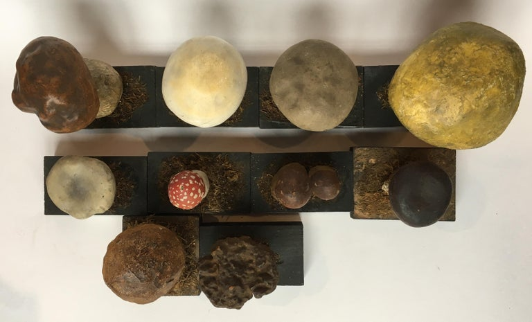 20th Century Wood and Painted Plaster Czech Mushroom Botanical Models circa 1920 For Sale 12