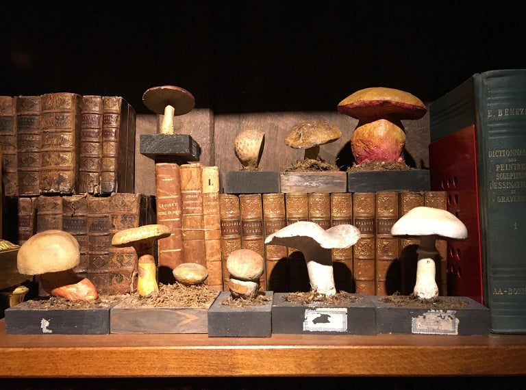 20th Century Wood and Painted Plaster Czech Mushroom Botanical Models circa 1920 For Sale 13