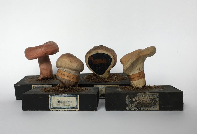 Collection of 34 mycological models Czechoslovakia, first twenty years of the 20th century.  The models are made using mixed techniques, mainly wood and painted plaster. Some specimens bear a paper label around the stem or on the base with the