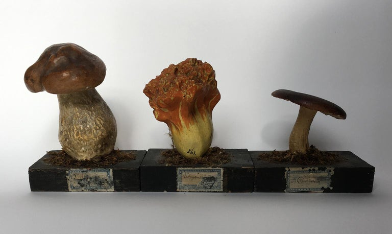 Other 20th Century Wood and Painted Plaster Czech Mushroom Botanical Models circa 1920 For Sale