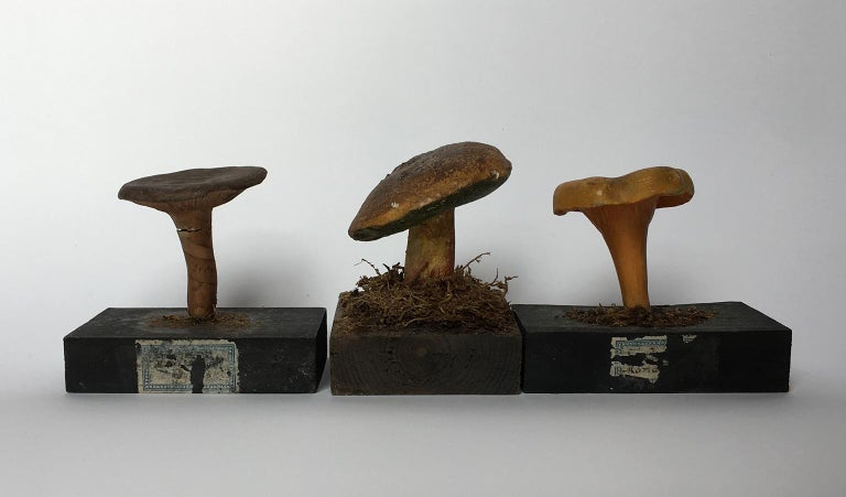 Carved 20th Century Wood and Painted Plaster Czech Mushroom Botanical Models circa 1920 For Sale