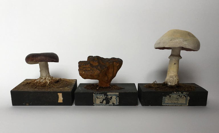 20th Century Wood and Painted Plaster Czech Mushroom Botanical Models circa 1920 In Good Condition For Sale In Milano, IT
