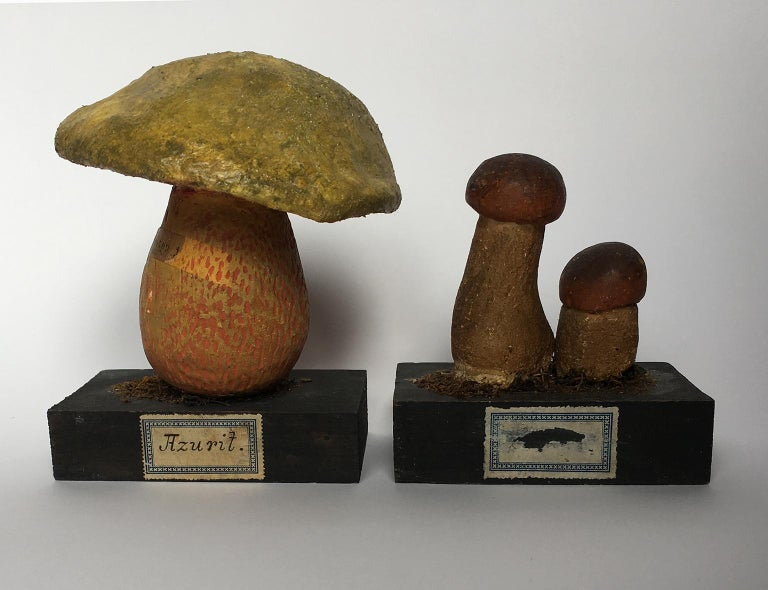 20th Century Wood and Painted Plaster Czech Mushroom Botanical Models circa 1920 For Sale 1