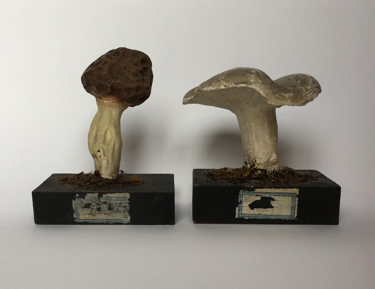 20th Century Wood and Painted Plaster Czech Mushroom Botanical Models circa 1920 For Sale 2