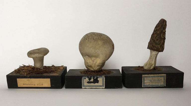 20th Century Wood and Painted Plaster Czech Mushroom Botanical Models circa 1920 For Sale 3