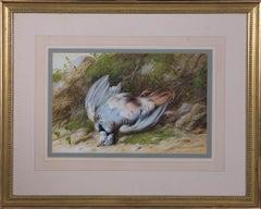 N. Cruickshank - Early 20th Century Gouache, Bird Still Life