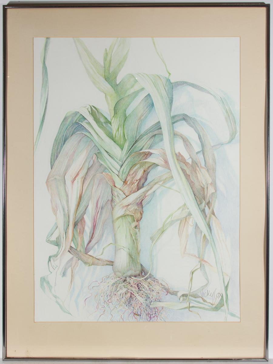 Vicky Cox - Framed 20th Century Coloured Pencil, The Leek