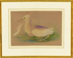 Framed 1809 Watercolour - A Study of Two Snowy Egrets