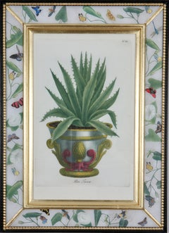 Johann Weinmann: 18th Century Engraving. Aloe in a Decorative pot.