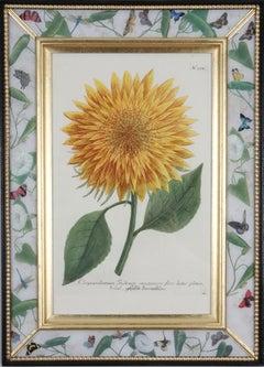 Johann Weinmann: 18th Century Engravings of Sunflowers, Set of 4, Framed