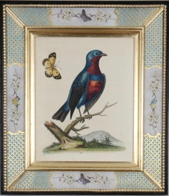 George Edwards: c18th Engravings of Birds in Decalcomania Frames