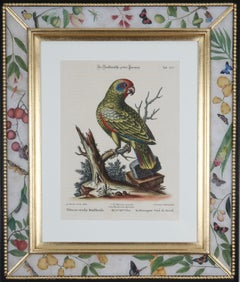 Johann Seligmann: Engravings of Parrots After George Edwards, 1770, Framed