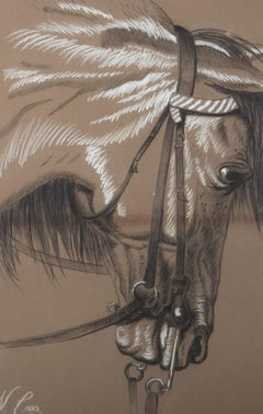 N. C. - 1889 Charcoal Drawing, Horse Head Study