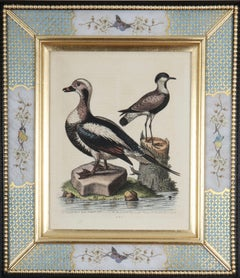 George Edwards: 18th Century Engravings of Ducks And Wading Birds