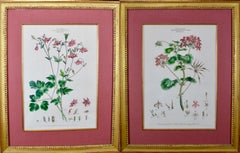 Pair of 18th Century Botanical Engravings of Columbine and Geranium Flowers