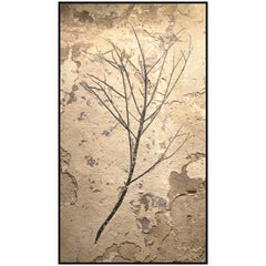 50 Million Year Old Eocene Era Fossil Branch Mural in Stone, from Wyoming