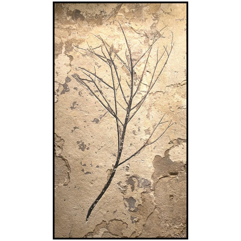 50 Million Year Old Eocene Era Fossil Branch Mural in Stone, from Wyoming For Sale
