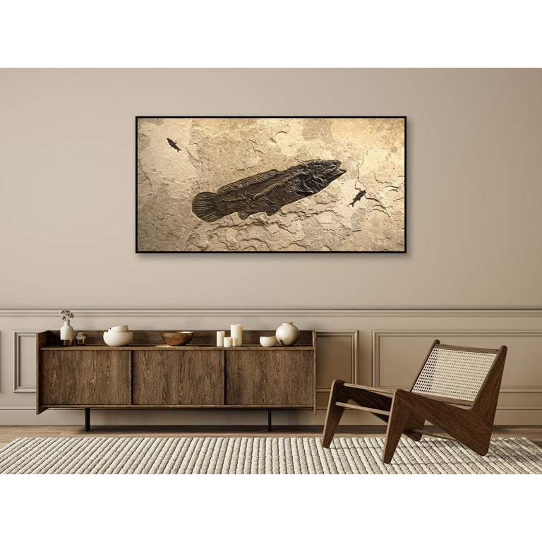 This fossil mural features an Amia pattersoni, an exceptionally rare Eocene era fossil fish dating back about 50 million years. This ancient bowfin has a remarkable degree of preservation, showcasing highly detailed scale pattern above the vertebral