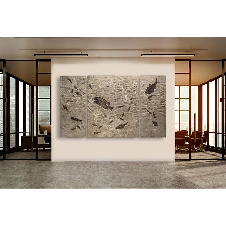 At approximately 8.5' long and 5' high, this triptych mural is designed for impact and drama. Featuring a naturally occurring rippling stone texture throughout, the fossil-bearing limestone matrix is a rich host for the genuine Eocene era fossil