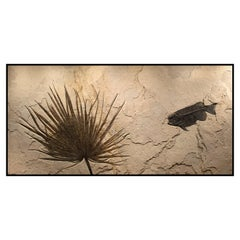 50 Million Year Old Eocene Era Fossil Palm & Fossil Fish in Stone, from Wyoming
