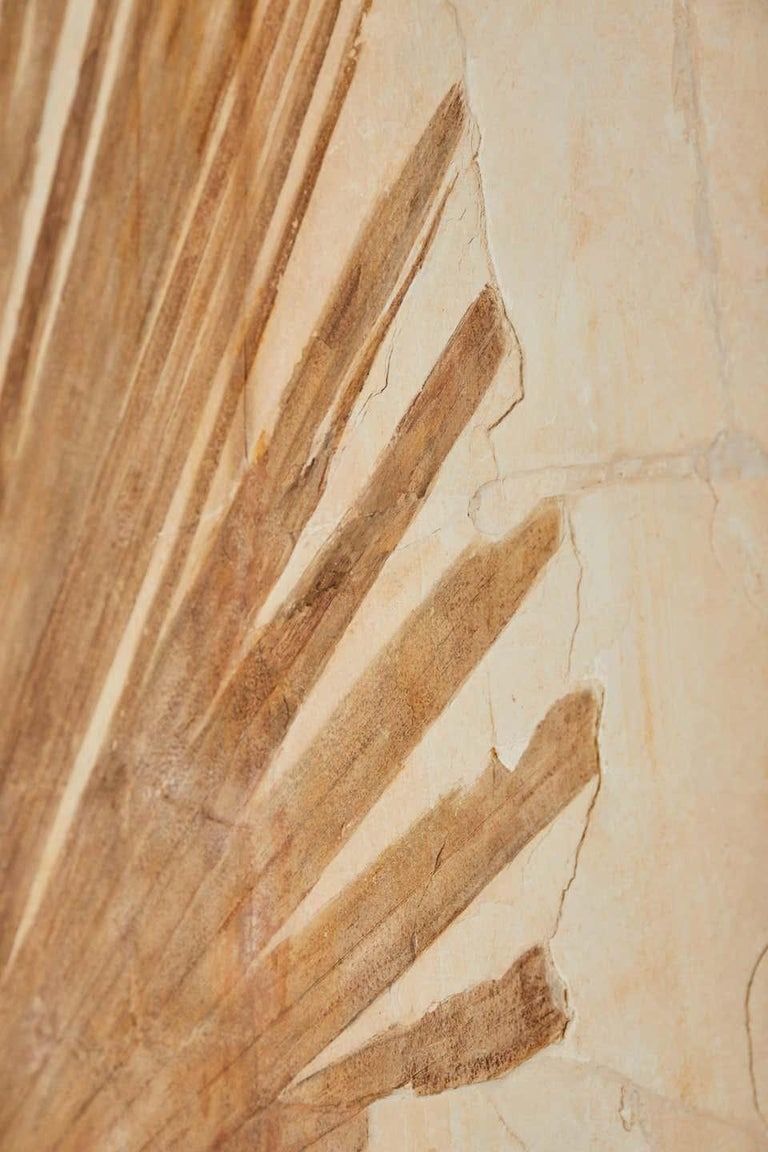 Contemporary 50 Million Year Old Eocene Era Fossil Palm Frond Mural in Stone, from Wyoming For Sale
