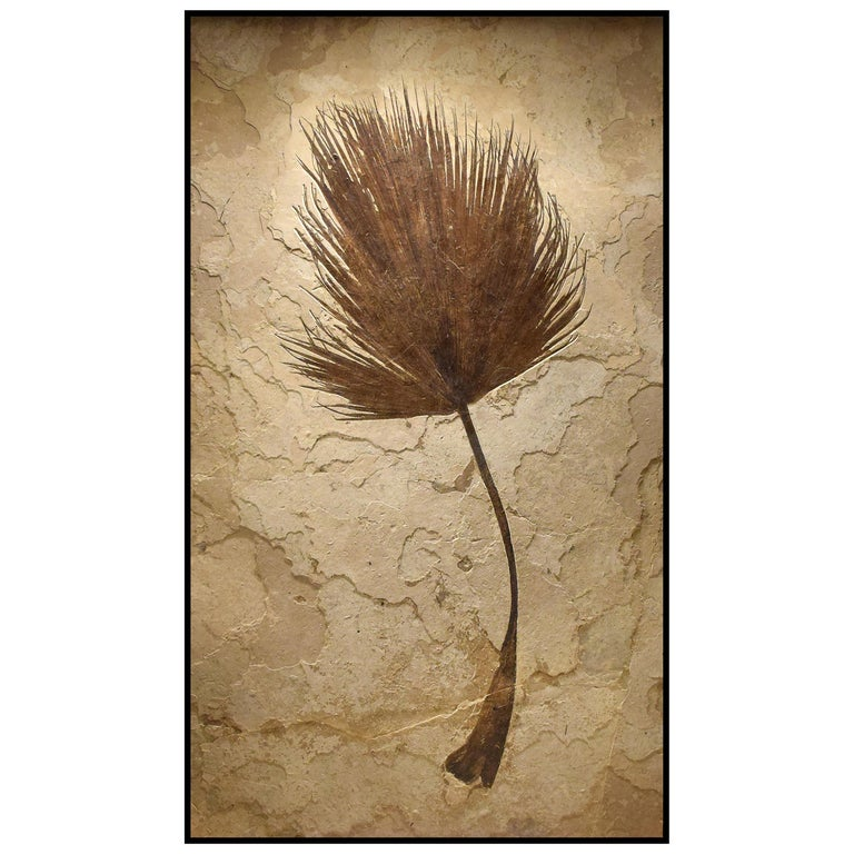 50 Million Year Old Eocene Era Fossil Palm Frond Mural in Stone, from Wyoming For Sale