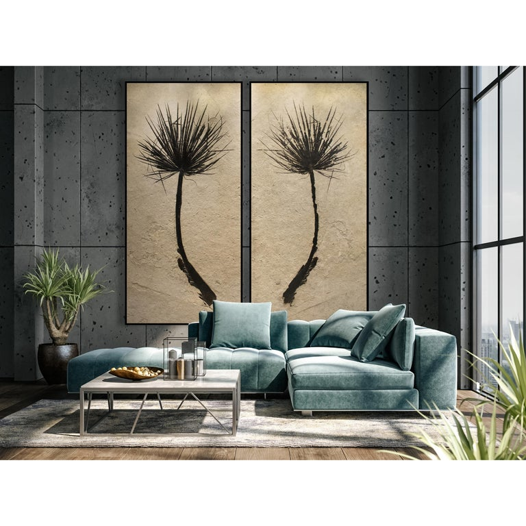 This diptych mural features two halves of a gorgeously preserved palm frond. This is an Eocene era fossil dating back about 50 million years. Plant life often produces some of the most aesthetic Green River Formation fossils we have prepared over
