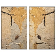 50 Million Year Old Fossil Leaf & Branch Diptych Mural in Stone, from Wyoming