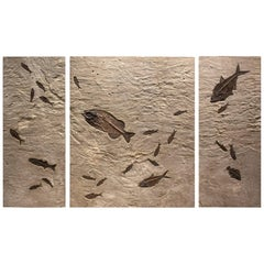 50 Million Year Old Eocene Era Fossil Fish Triptych Mural in Stone, from Wyoming