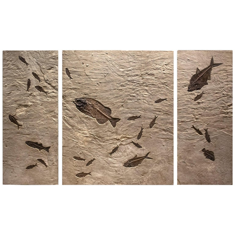50 Million Year Old Eocene Era Fossil Fish Triptych Mural in Stone, from Wyoming For Sale