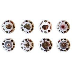 8 Piero Fornasetti Dinner Plates Decorated with Urchins and Sea Shells