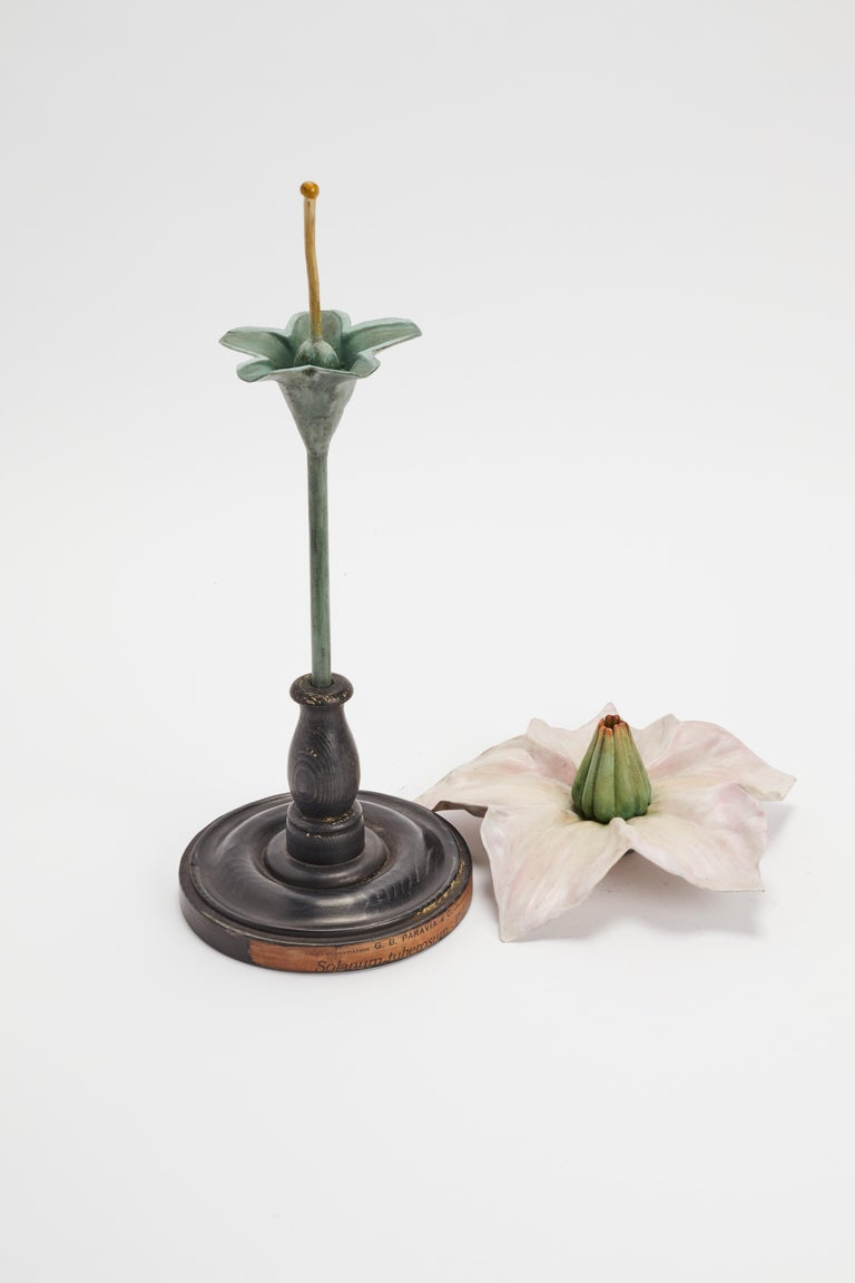 Early 20th Century Botanic Model, Italy, 1900 For Sale