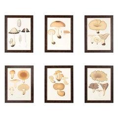 Charming Set of Six Mushroom Lithographs
