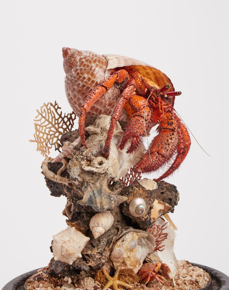 Coral Diorama with Hermit Crab, Italy, 1870 For Sale