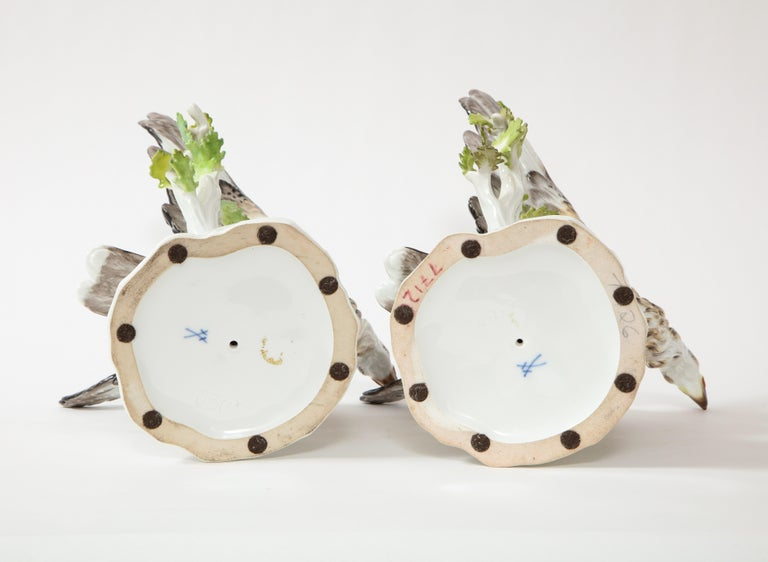 Fine Pair of Meissen Porcelain Models of Eagles Resting on Branches For Sale 7