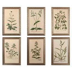 Fine Set of Six William Curtis Botanicals
