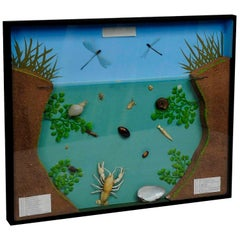 Great Vintage School Teaching Display of the Fresh Water Habitat