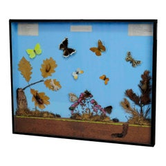 Great Vintage School Teaching Display of the Insects of the Forest Edge