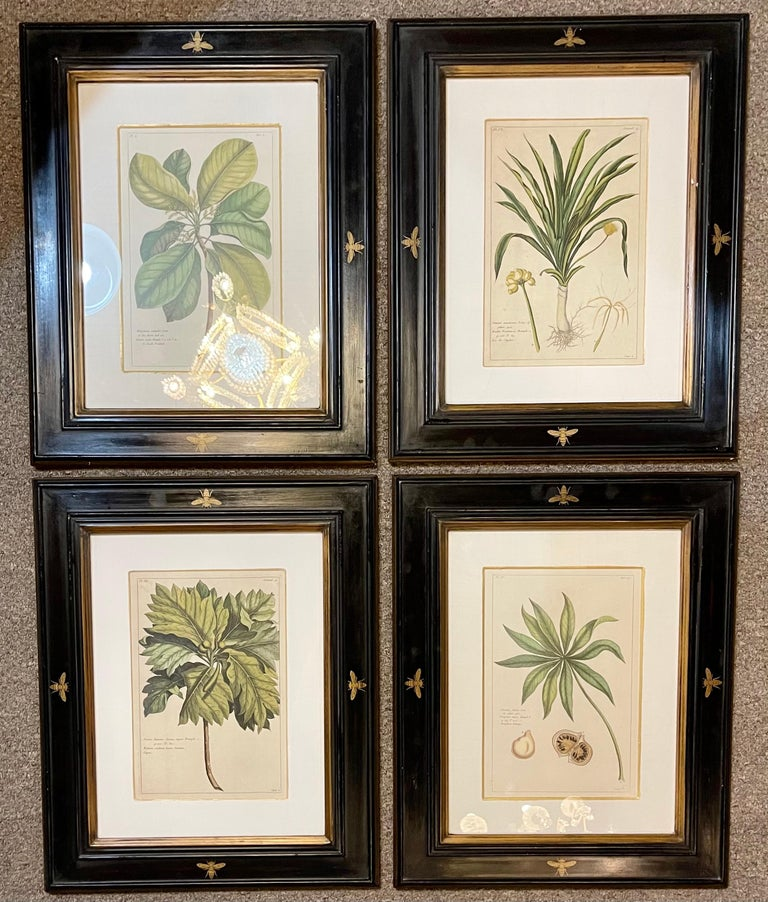A group of four finely matted and framed original hand colored engravings of flower and fruits. Pierre Joseph Buchoz - Le Regne Vegetale. Custom towbridge frames.