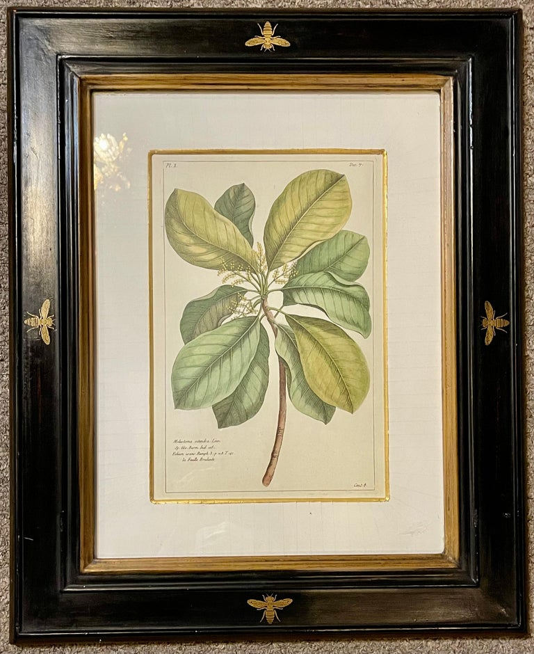 Other Group of Four Finely Matted and Framed Original Hand Colored Engravings For Sale
