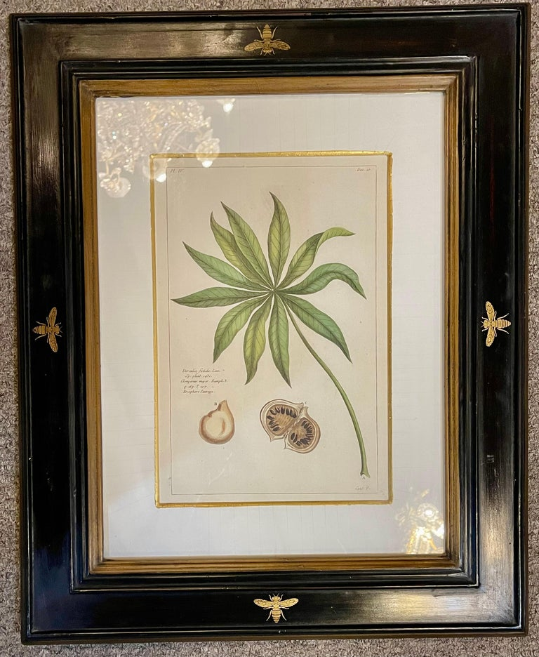 Ebonized Group of Four Finely Matted and Framed Original Hand Colored Engravings For Sale