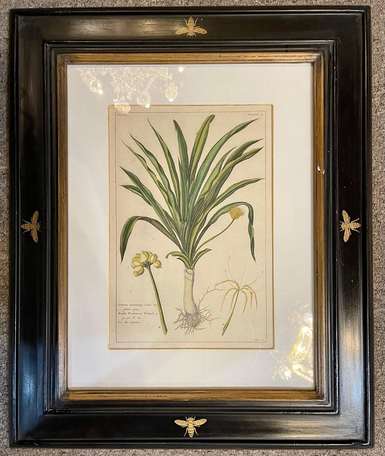 Group of Four Finely Matted and Framed Original Hand Colored Engravings In Good Condition For Sale In Stamford, CT