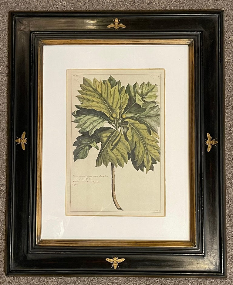 20th Century Group of Four Finely Matted and Framed Original Hand Colored Engravings For Sale