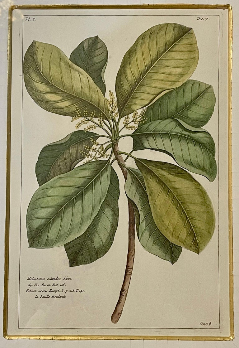 Group of Four Finely Matted and Framed Original Hand Colored Engravings For Sale 2