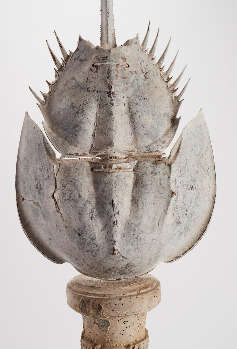 A marine natural Wunderkammer specimen. A taxidermy Atlantic Horse Shoe Crab (Limulus Polyphemus). The Specimen is stuffed and mounted over a painted wooden base, Italy, circa 1870.