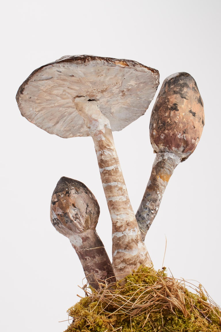 Mushrooms Models, Germany, 1890 In Excellent Condition For Sale In Milan, IT