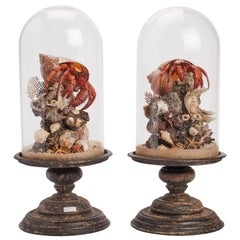 Pair of Diorama with Hermit Crab, Italy, 1870